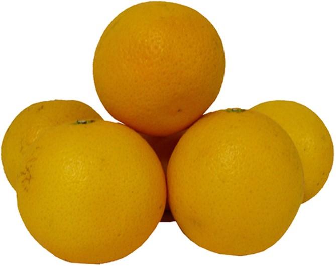 perssinaasappelen weekaanbieding joycegroenteenfruit